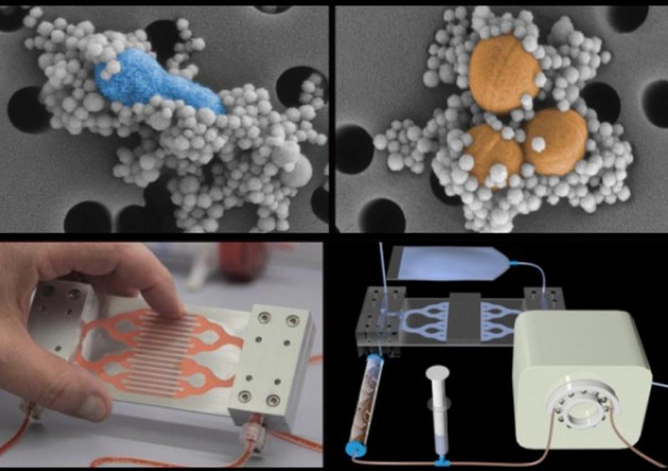 """Izquierda arriba: nanogranos enlazados a E. Coli, Arriba derecha: Nanogranos enlazados a S. Aureus, Imagenes de abajo, el dispositivo que simula un """"biobazo"""""""