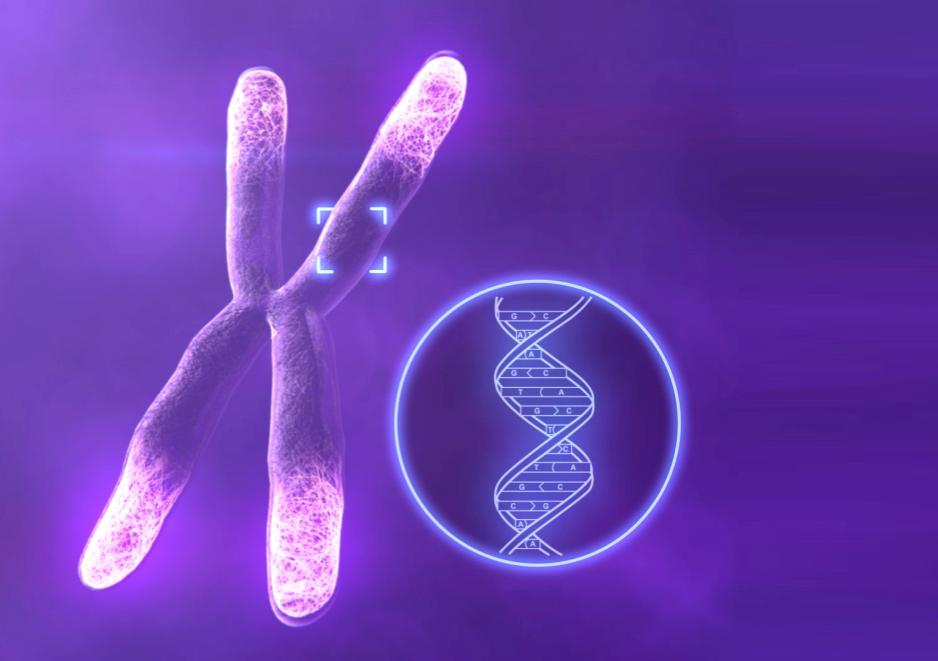 Telómeros, la etiqueta de caducidad de nuestras celulas