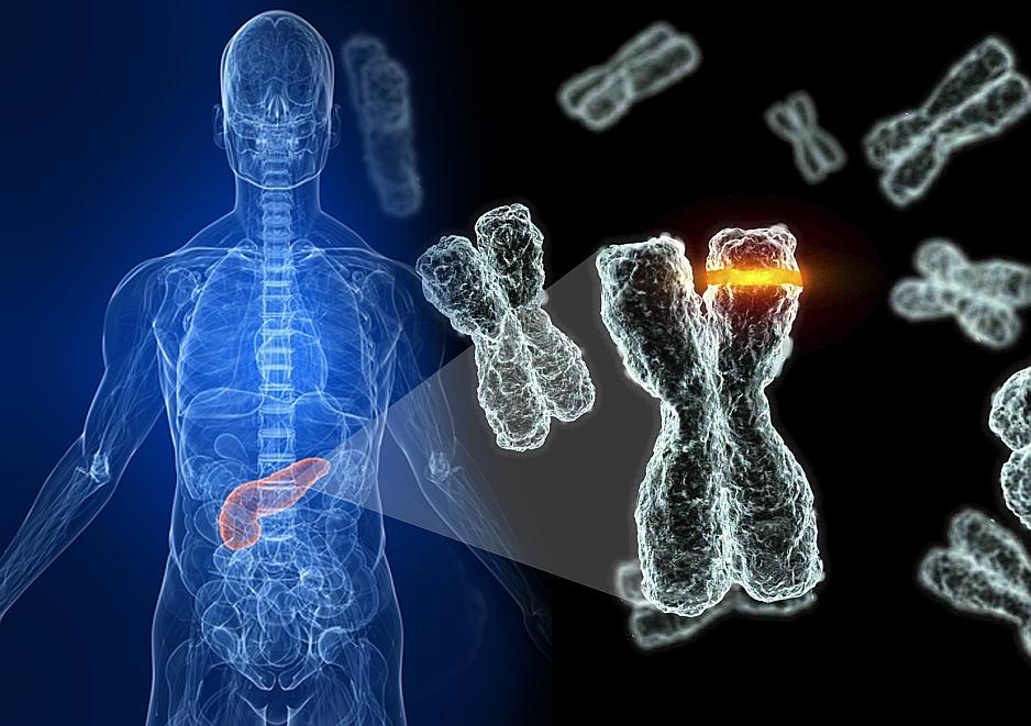Los telómeros, esos pequeños terminales protectores responsables del envejecimiento