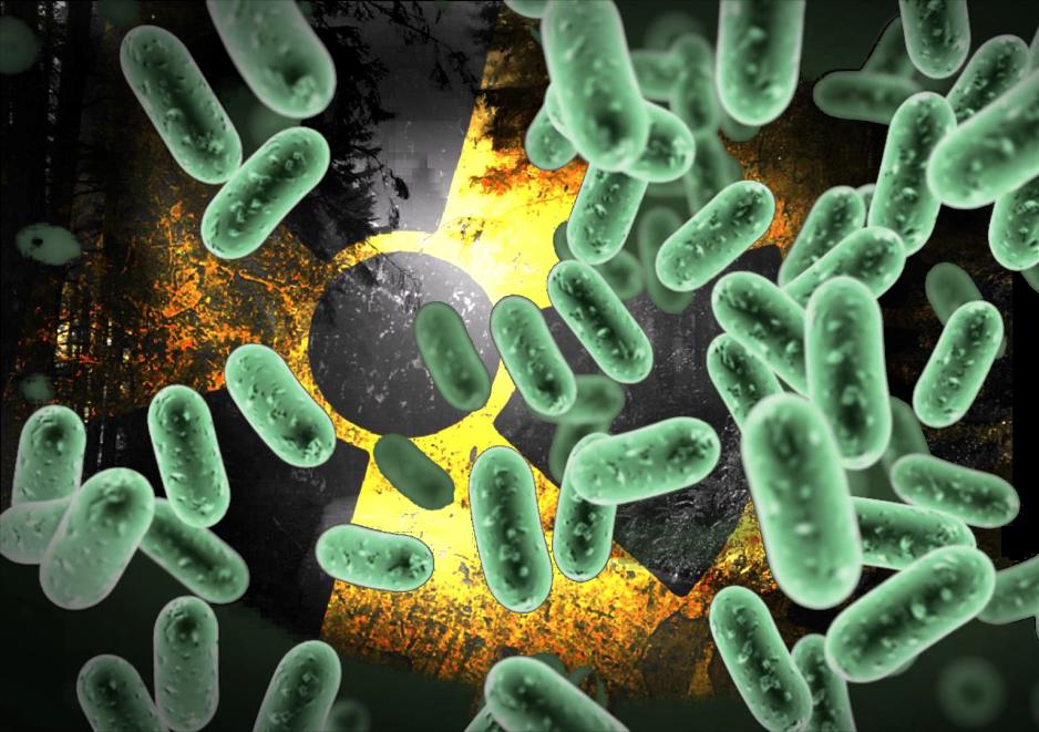 """Encuentran una bacteria que """"Respira"""" Uranio"""