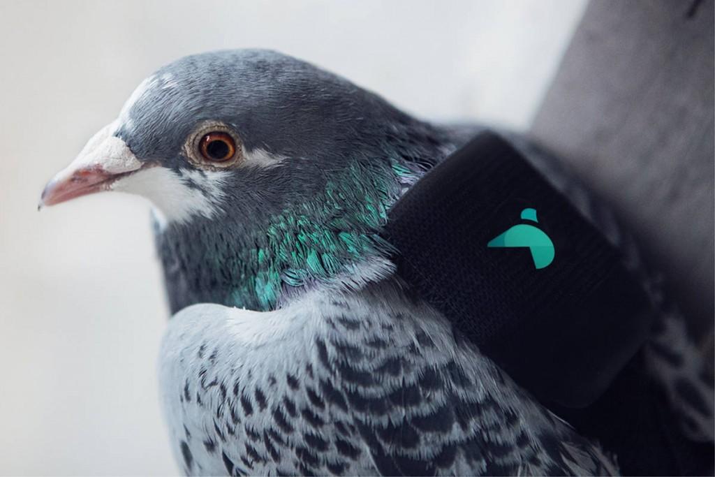 Estas simpáticas aves usan un sensor para medir la polución