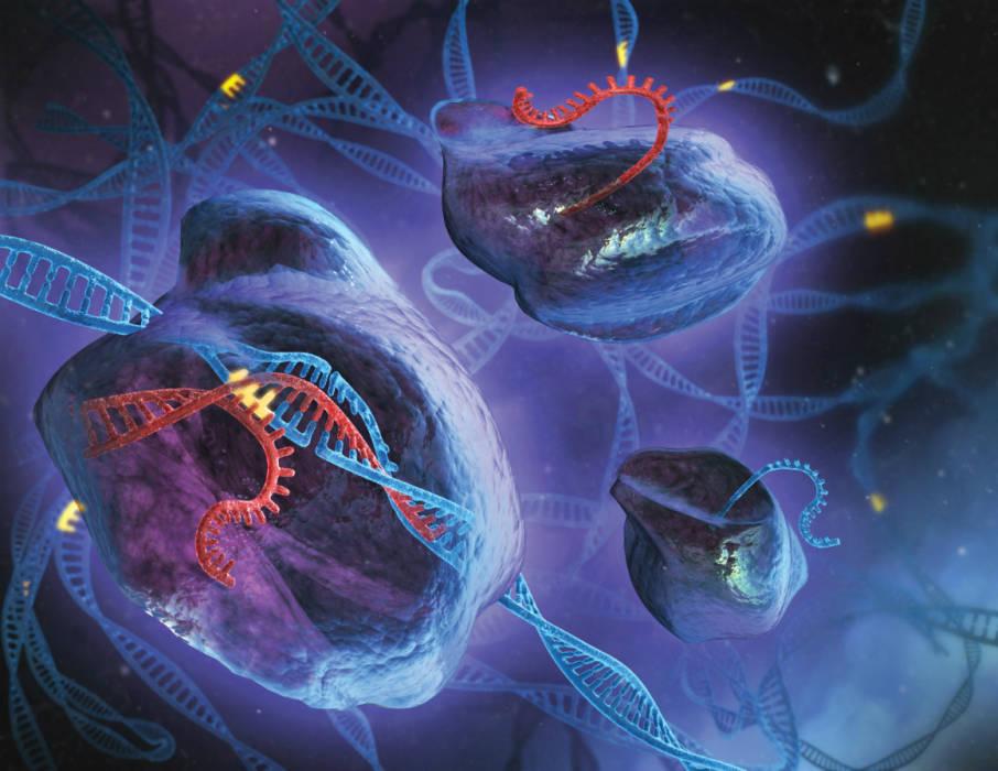 Eliminan los genes de HIV de una célula inmune infectada